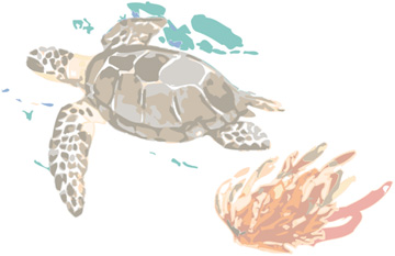 Turtle Watercolor