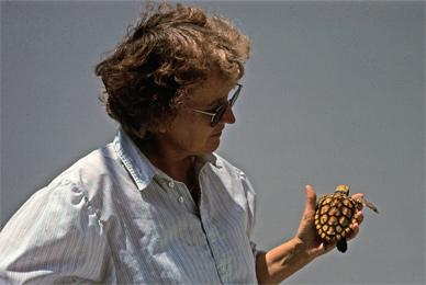 "Helen Martins with ""lost year"" loggerhead from the waters around the Azores. Photo: Alan Bolten"