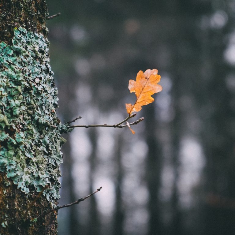 image of an orange leave branching off of a tree with leaves making the shape of a heart
