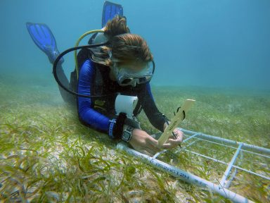 """young woman diver holds ruler reading """"ACCSTR"""" against blades of grass on the ocean floor"""